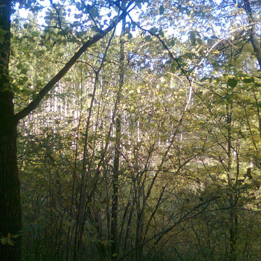 bos achterkant 2